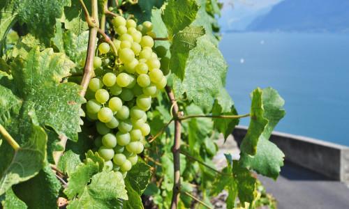 Faktorer som bestemmer kvalitet på vin